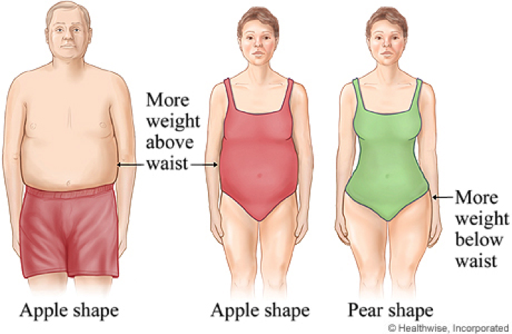 illustration belly fat waist man women | Holmes Place