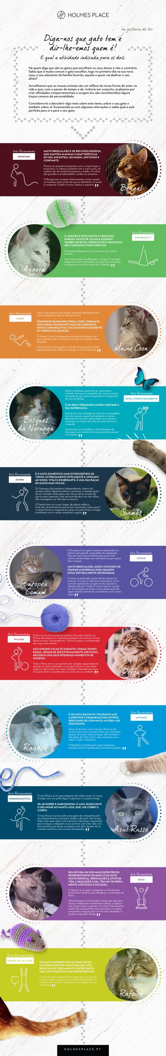 infográfico gatos finalissimo