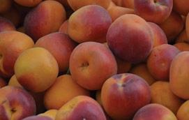 Alperce - fruta de verão