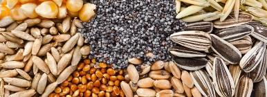 Proteína Vegetal - sementes   Holmes Place