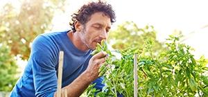 dieta produtos orgânicos_3
