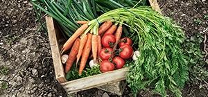 dieta produtos orgânicos 4