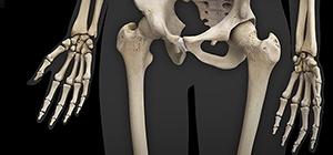 cálcio ossos