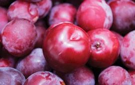 Ameixa - fruta de verão | Holmes Place